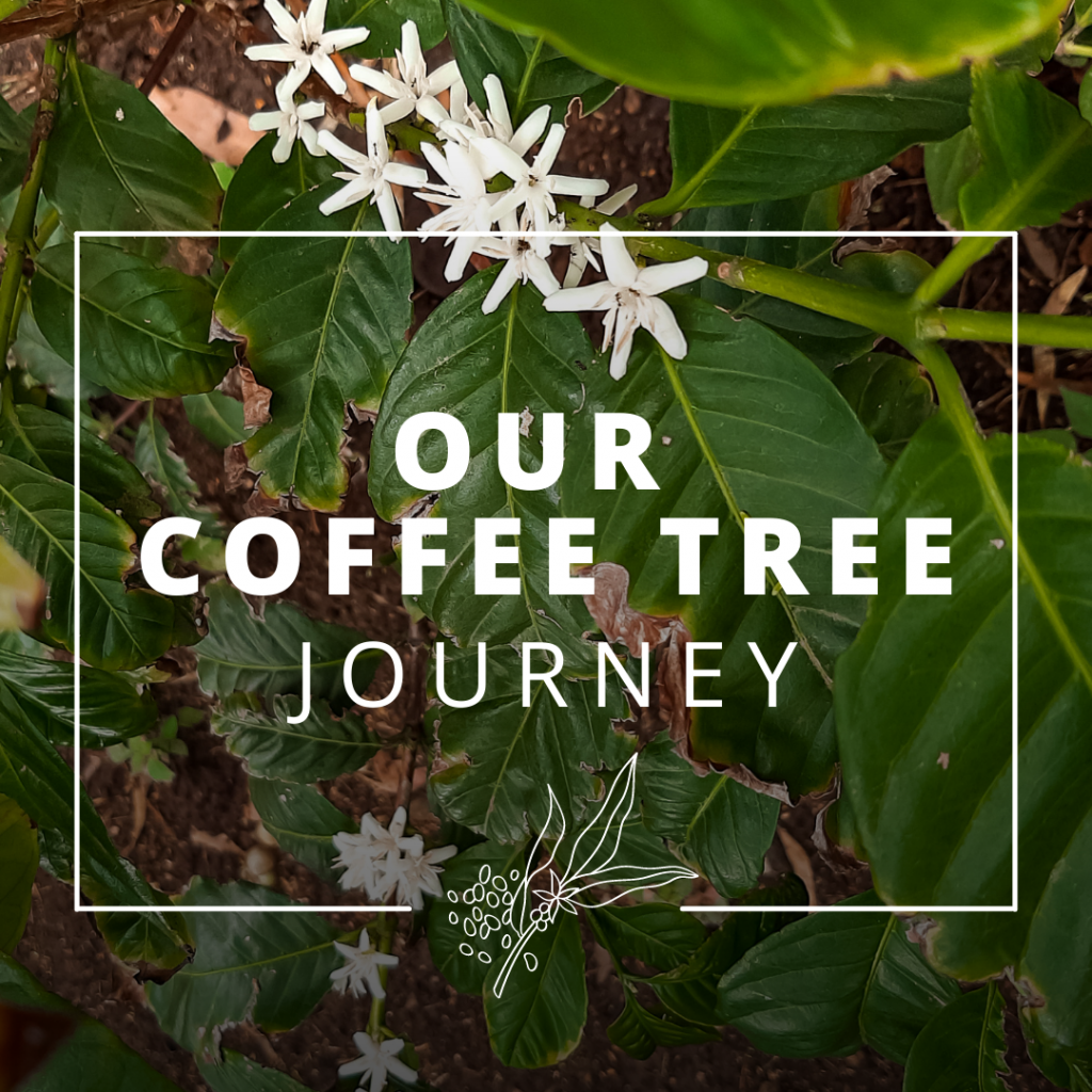 OUR COFFEE TREE